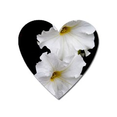 White Peonies   Large Sticker Magnet (heart)
