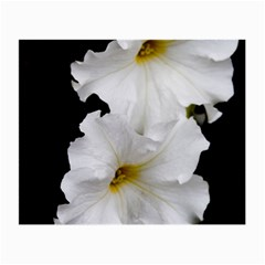 White Peonies   Glasses Cleaning Cloth