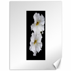 White Peonies   36  x 48  Unframed Canvas Print