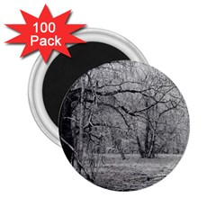 Black And White Forest 100 Pack Regular Magnet (round)