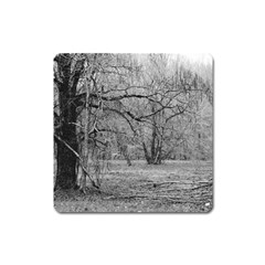 Black And White Forest Large Sticker Magnet (square)