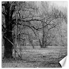 Black And White Forest 12  X 12  Unframed Canvas Print