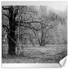 Black And White Forest 20  X 20  Unframed Canvas Print
