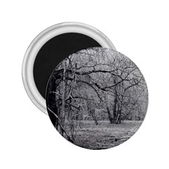 Black and White Forest Regular Magnet (Round)