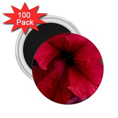 Red Peonies 100 Pack Regular Magnet (Round)