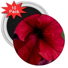 Red Peonies 10 Pack Large Magnet (Round)