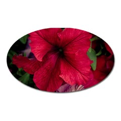 Red Peonies Large Sticker Magnet (Oval)