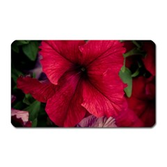 Red Peonies Large Sticker Magnet (Rectangle)