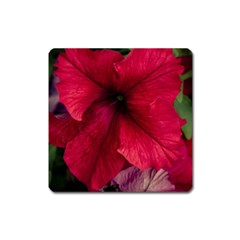 Red Peonies Large Sticker Magnet (Square)