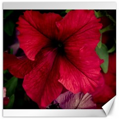 Red Peonies 20  x 20  Unframed Canvas Print