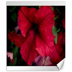 Red Peonies 20  x 24  Unframed Canvas Print