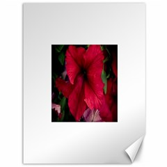 Red Peonies 36  x 48  Unframed Canvas Print
