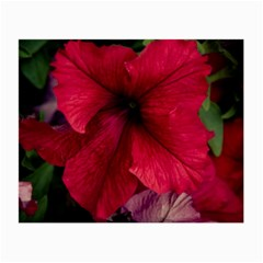 Red Peonies Twin-sided Glasses Cleaning Cloth