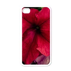 Red Peonies White Apple iPhone 4 Case