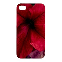 Red Peonies Apple Iphone 4/4s Hardshell Case