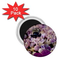 Flying Bumble Bee 10 Pack Small Magnet (round)