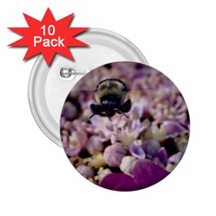 Flying Bumble Bee 10 Pack Regular Button (round)