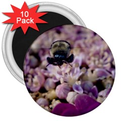 Flying Bumble Bee 10 Pack Large Magnet (Round)