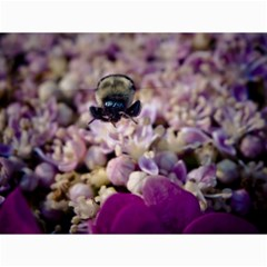 Flying Bumble Bee 12  X 16  Unframed Canvas Print