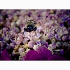 Flying Bumble Bee 16  x 20  Unframed Canvas Print