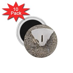 Quarter of a Sand Dollar 10 Pack Small Magnet (Round)