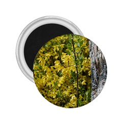 Yellow Bells Regular Magnet (round)