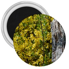 Yellow Bells Large Magnet (round)