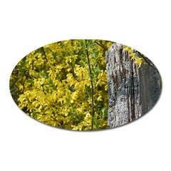 Yellow Bells Large Sticker Magnet (Oval)