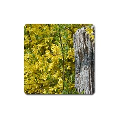 Yellow Bells Large Sticker Magnet (Square)