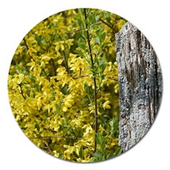 Yellow Bells Extra Large Sticker Magnet (round)