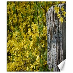 Yellow Bells 8  X 10  Unframed Canvas Print