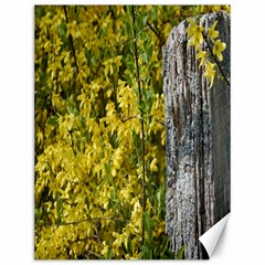 Yellow Bells 12  x 16  Unframed Canvas Print