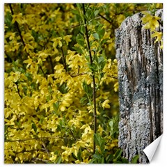 Yellow Bells 16  x 16  Unframed Canvas Print