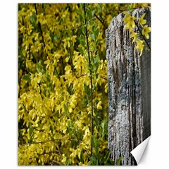 Yellow Bells 16  x 20  Unframed Canvas Print