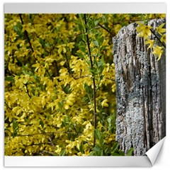 Yellow Bells 20  x 20  Unframed Canvas Print