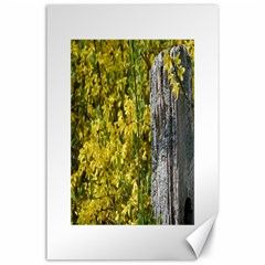 Yellow Bells 24  x 36  Unframed Canvas Print