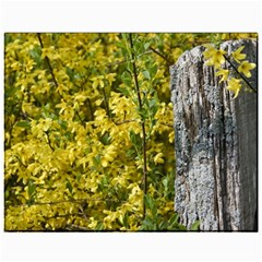 Yellow Bells 11  x 14  Unframed Canvas Print