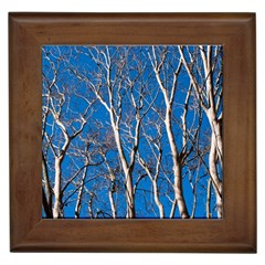 Trees on Blue Sky Framed Ceramic Tile