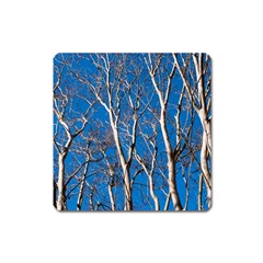 Trees on Blue Sky Large Sticker Magnet (Square)