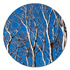 Trees on Blue Sky Extra Large Sticker Magnet (Round)