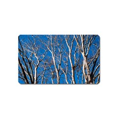 Trees on Blue Sky Name Card Sticker Magnet