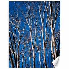 Trees On Blue Sky 12  X 16  Unframed Canvas Print