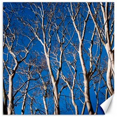 Trees on Blue Sky 16  x 16  Unframed Canvas Print