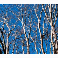 Trees On Blue Sky 20  X 20  Unframed Canvas Print