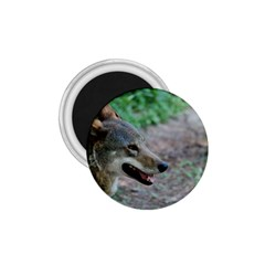 Red Wolf 1.75  Button Magnet