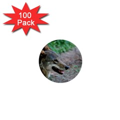 Red Wolf 1  Mini Button (100 Pack)
