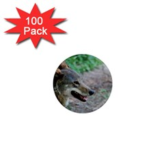 Red Wolf 1  Mini Button Magnet (100 pack)