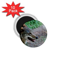 Red Wolf 1.75  Button Magnet (10 pack)