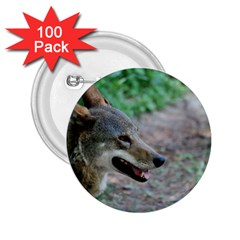 Red Wolf 2.25  Button (100 pack)