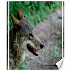 Red Wolf Canvas 8  x 10  (Unframed)